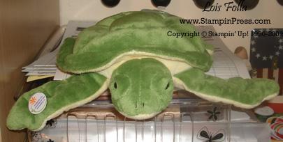 TurtleShip 2009